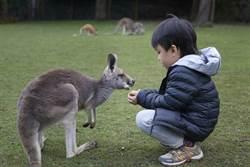 熱斃了,雪梨野生動物園餵動物吃冰消暑