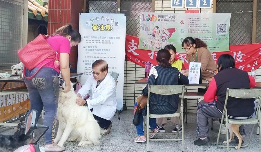 台中市動物保護防疫處,今年持續辦理偏區犬貓絕育活動,免費提供犬貓絕育、寵物登記及施打狂犬病疫苗服務。(台中市動物保護防疫處提供/陳世宗台中傳真)