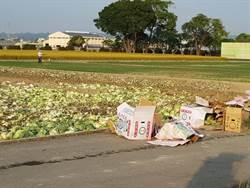農委會聯手北農銷毀高麗菜 專家:過程不合理
