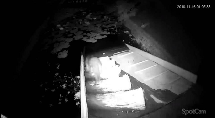 夜間監測顯示水獺使用生態廊道的實況。(金門縣府提供)