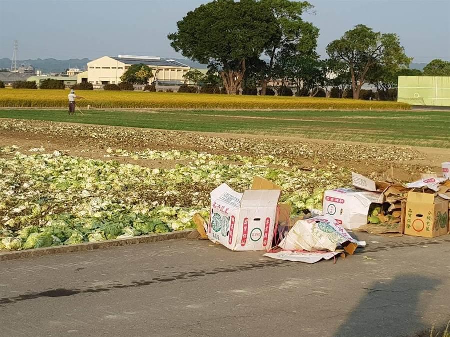林佳新踢爆農委會與北農聯手銷毀過剩高麗菜。(林佳新提供)