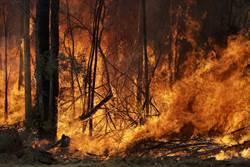 可惡!澳野火燒不盡 24人竟敢蓄意縱火