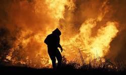澳洲大火奪5億條命 專家提嚴重警告