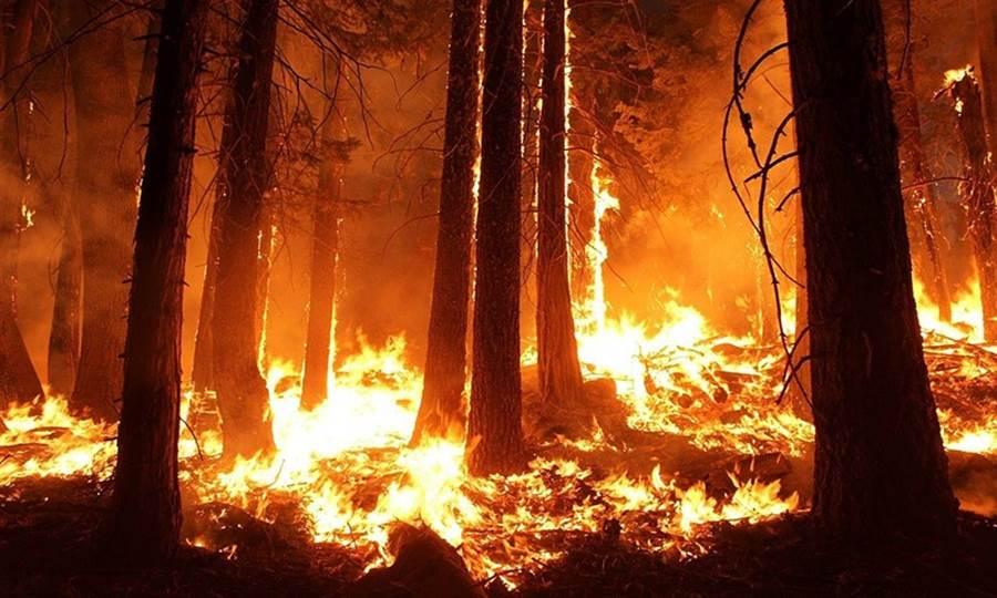 在澳洲大火之前,包括美國加州、亞馬遜雨林都曾爆發森林大火,科學家認為極端氣候助長了火勢。(圖片來源:Pixabay)