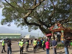 卓蘭200多歲老榕樹裝支架 13日起封閉單線車道