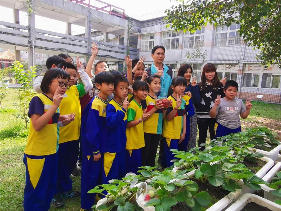 官田國小學童歡喜收成草莓。(劉秀芬攝)