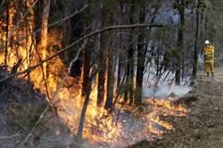 蘋果與紅十字會合作 官網發起為澳洲大火捐款