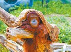 小男友出借木柵育種 貝比孤獨離世