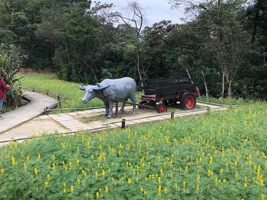 魯冰花與牛車。(圖取自台北旅遊網)