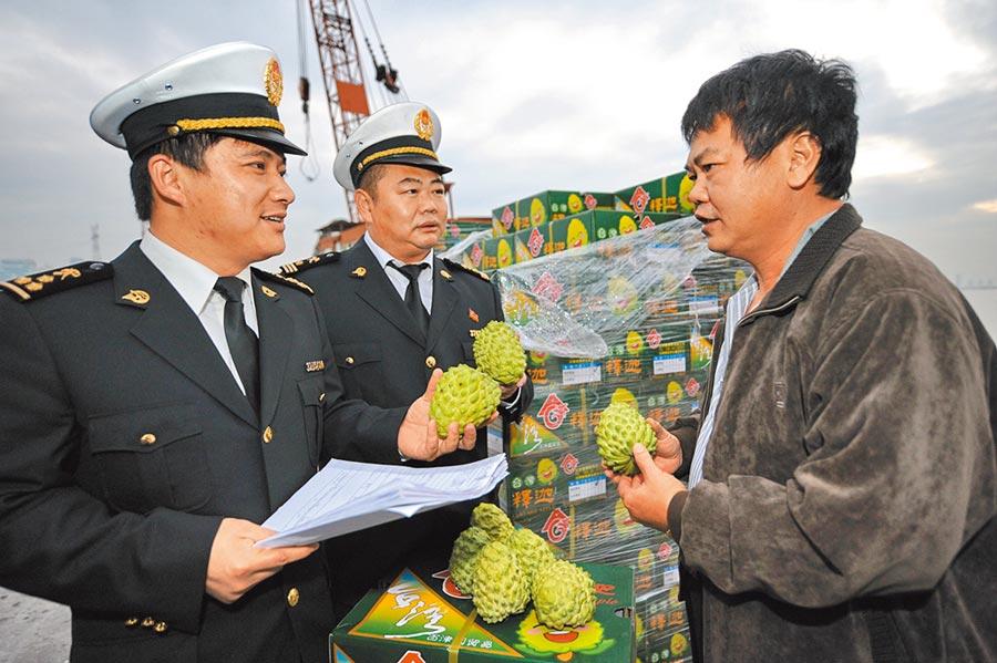 反滲透法將於1月15日公告實施,農會憂心登陸賣農產品會觸法。圖為台灣水果商和大陸海關關員交流台灣水果報關事宜。(新華社)