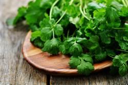 不只是天然解毒劑! 美研究:香菜可延緩「癲癇」發作