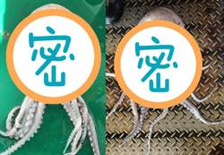 漁民捕獲詭異生物 專家:台灣第1隻