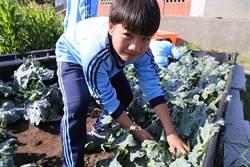 布袋國中學生開闢校內鹽灘地 種植無毒蔬菜