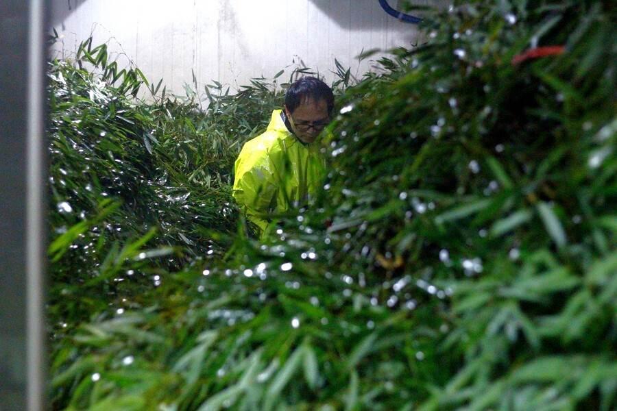 大貓熊專用的竹葉數量十分驚人,竟然需要整整一個房間這麼大的冷藏室儲存。(台北市立動物園提供)