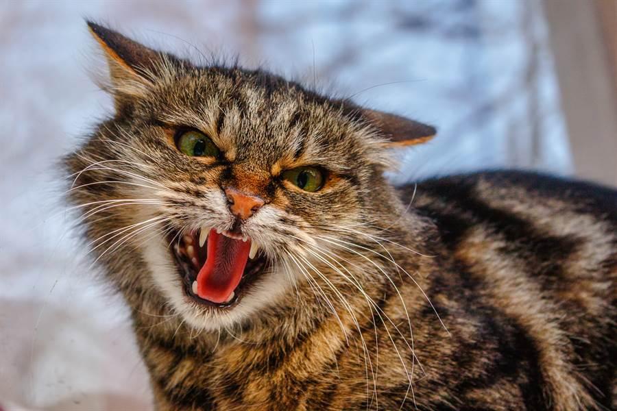 3惡狼闖民宅 小貓咪發威全數擊退(示意圖/達志影像)