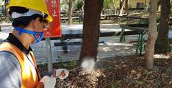 東豐自行車綠廊防治病蟲害觀 旅局聘專家為樹木健檢