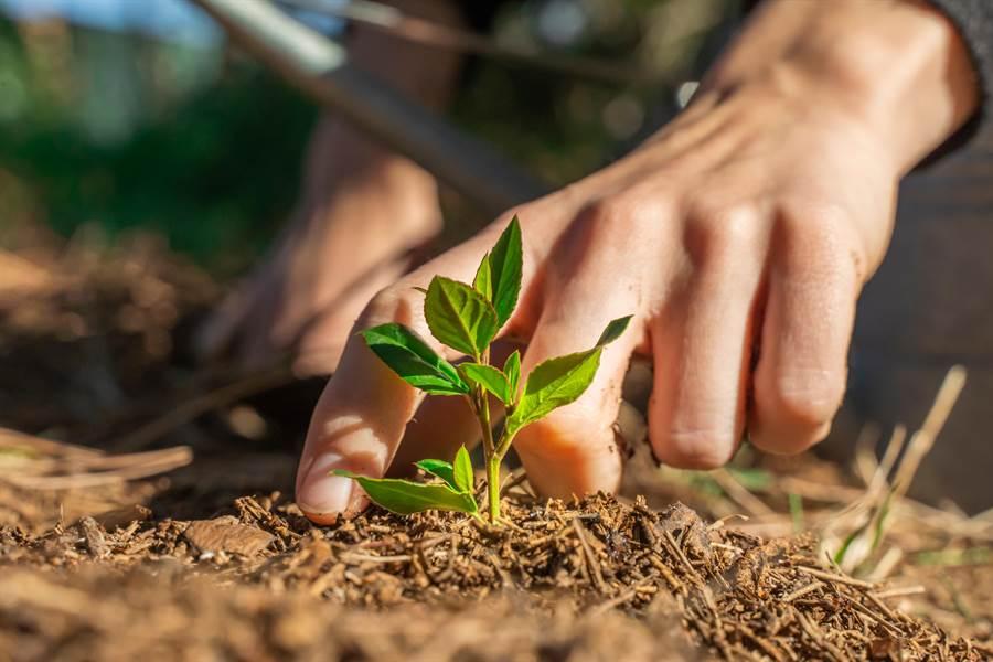 行政院農業委員會農業試驗所開發各種植物病毒抗血清,加值調製成快篩試劑,在10分鐘內即可得到植物病毒檢測結果。(圖/Shutterstock)