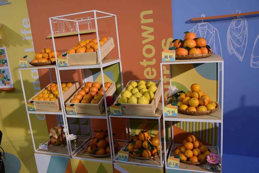 新竹縣為柑桔的故鄉,生產數十品種柑桔,讓民眾可品嘗不同風味。(莊旻靜攝)