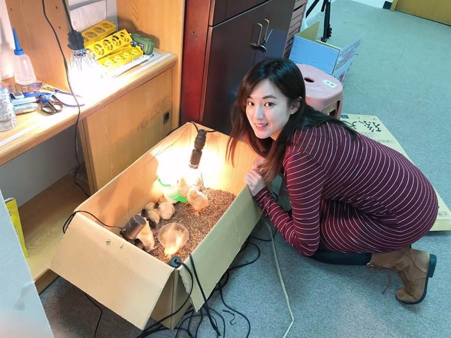 韓國瑜孵的雞在這裡!何庭歡跪著看。(圖/摘自何庭歡FB)