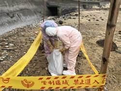全球僅剩約1000隻  「露脊鼠海豚」陳屍馬祖沙灘