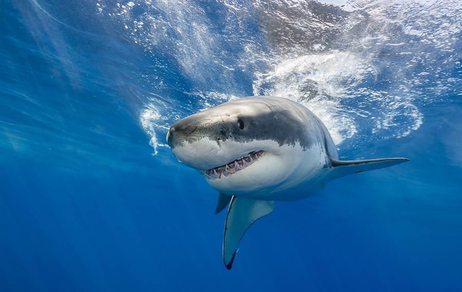 鯊魚潛伏泳客身後 無人機拍下驚險一幕(示意圖/達志影像)