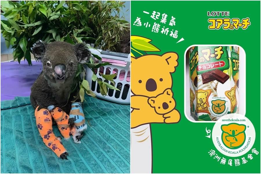 左圖為被澳洲女子救出火場的無尾熊路易斯(Lewis),但仍因傷勢過重,最後不得已之下,讓牠安樂死(圖/摘自Koala Hospital Port Macquarie FB)。家樂福小編表示,購買樂天小熊餅乾也是一項幫助無尾熊的辦法。(圖/摘自家樂福FB)