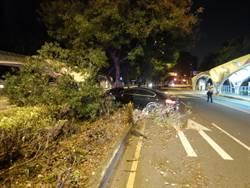 雙B名車超速失控 自撞分隔島路樹