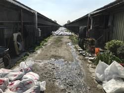 彰化再爆禽流感!竹塘土雞場撲殺2萬隻雞
