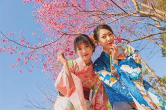 復興山櫻花開了 浴衣租借邀民體驗日式風情
