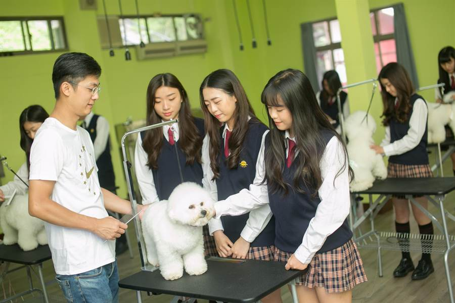 明台高中寵物經營科教導學生實作課程,盼縮短學用落差。(林欣儀攝)