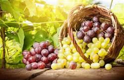 超市買葡萄 竟暗藏劇毒蛋