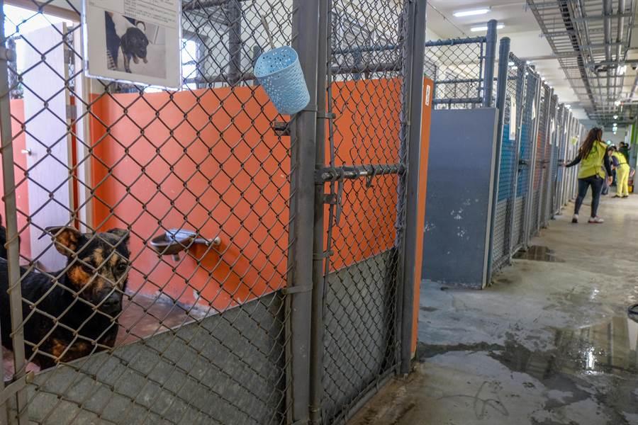 新竹市動保園區啟用,動物住宿區可收容流浪犬250隻和流浪貓150隻。(羅浚濱攝)