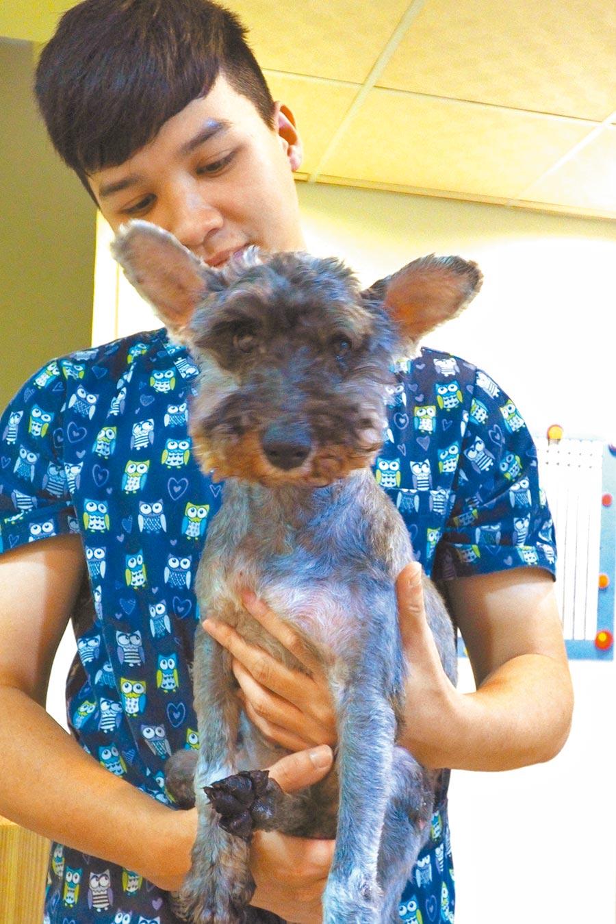 20歲的老狗「多多」喜歡與人親近。(記者王曉鈴攝)