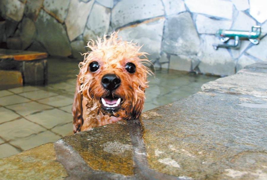現代人為了寵物的健康與美不惜掏腰包,圖為日本的寵物溫泉。(記者王曉鈴攝)