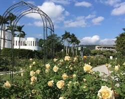 台北新生公園走春趣!玫瑰、海芋綻放比美 瞭望飛機映照藍空