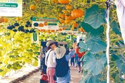 屏東熱博會 展現農業軟實力