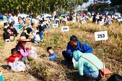 紅豆毒鳥事件後產銷履歷受重視 2000人大手牽小手樂採優質紅豆