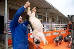 影》厲聲尖叫!75公斤活豬高空彈跳 陸風景區惹眾怒