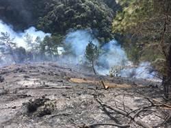 燒了一天多梨山森林大火 陸空聯合搶救終獲控制