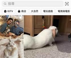 IG取消「IGTV」主頁面圖示 使用人數太少