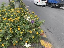 特斯拉撞死女童路口 里長曾要求設號誌被駁 新北交通局:二月底前完成