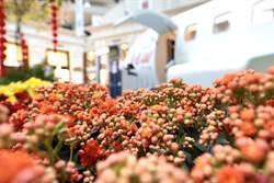 蝴蝶蘭X鬱金香!101花團錦簇 花園停機坪上聽管弦樂
