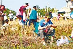 2000人下田 採收產銷履歷紅豆