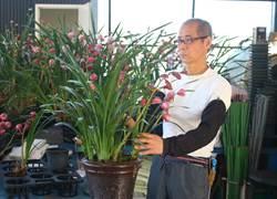 蒲卉蘭園父子兩代齊心 開創蝴蝶蘭一片天