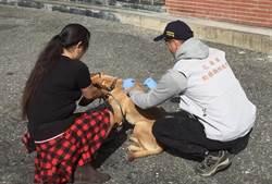 花蓮》花蓮市確認白鼻心染狂犬病首例