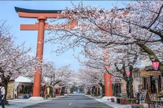 超殺底片!飛往日本賞櫻、紫藤迎接浪漫花季