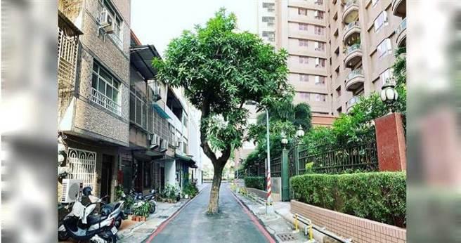 高雄最強路霸,擋在這卻沒人敢動,因為移動這樹至少要花上千萬元新台幣。(圖/翻攝自臉書粉絲專頁「高雄點 Kaohsiung.」)