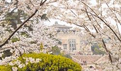 武漢大學花名在外 兩岸爭賞