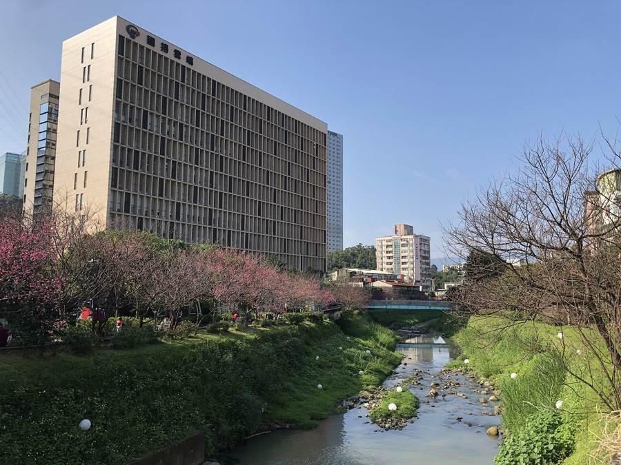 河岸櫻花美景。(圖取自新北市景觀處官網)
