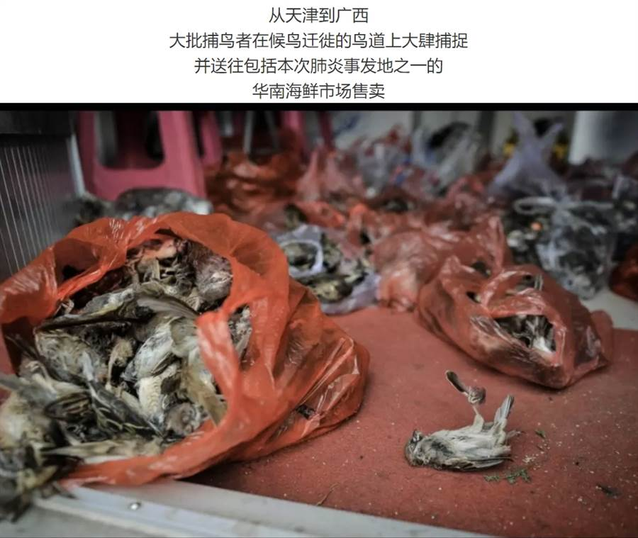 就連遷徙的候鳥也逃不過獵人毒手,成為海鮮市場內饕客的選項之一 (圖/翻攝自微信公眾號@多維面面觀)